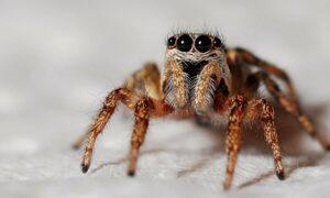Nie taki pająk straszny, jak go malują